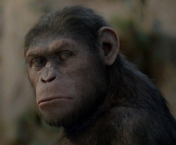 planeta dos macacos (Foto: UC)