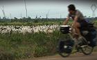 Os Problemas Da Pecuária