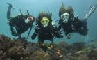Arquipélago De Bazaruto. Ponto De Mergulho: Locker Room (Two Mile Reef)